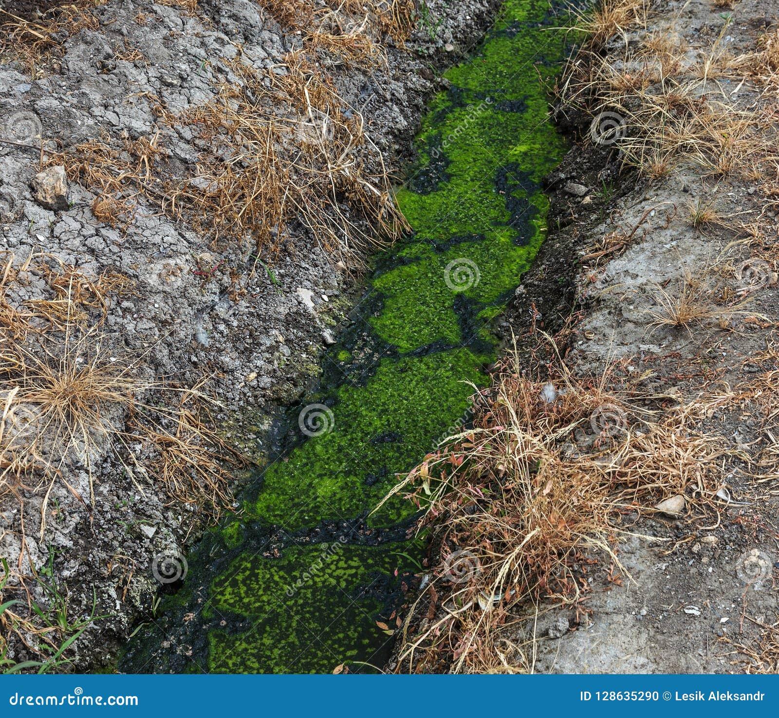 Água de esgoto suja junto com a água de esgoto em uma vala aberta ao longo da rua Drenagem suja, um coletor aberto do esgoto aqui