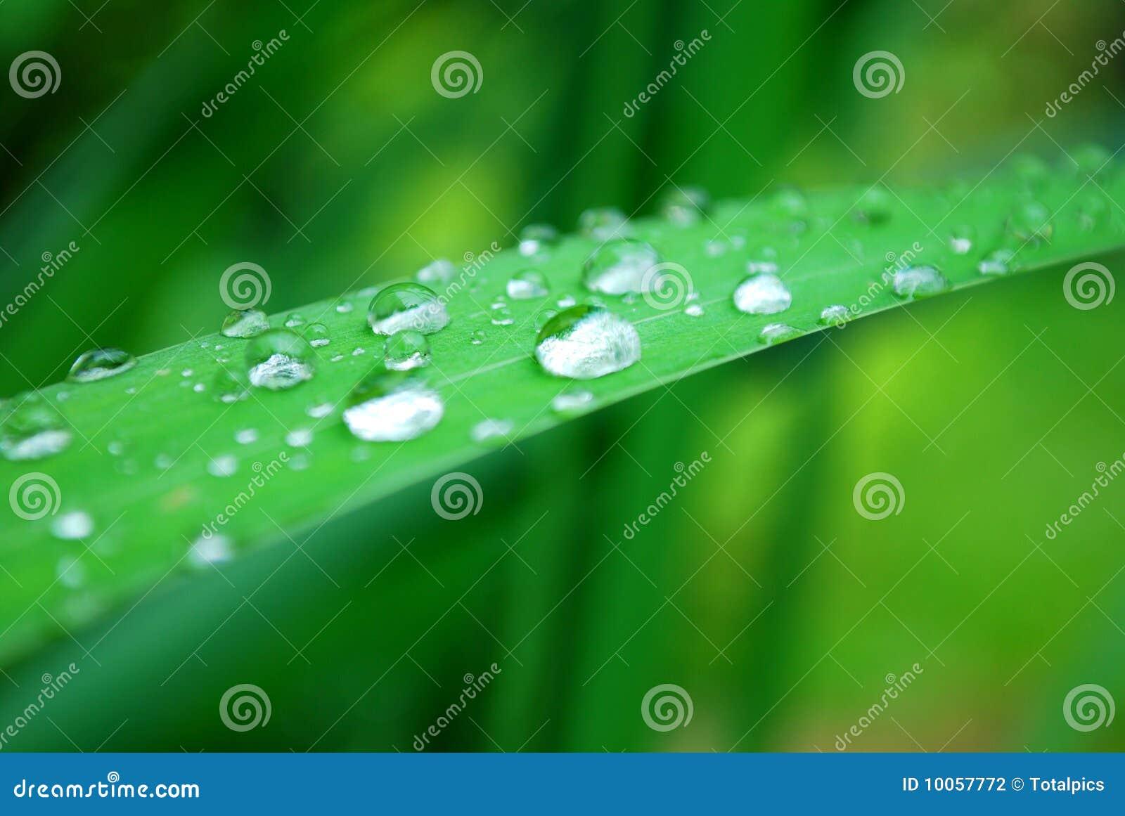 A água deixa cair a folha