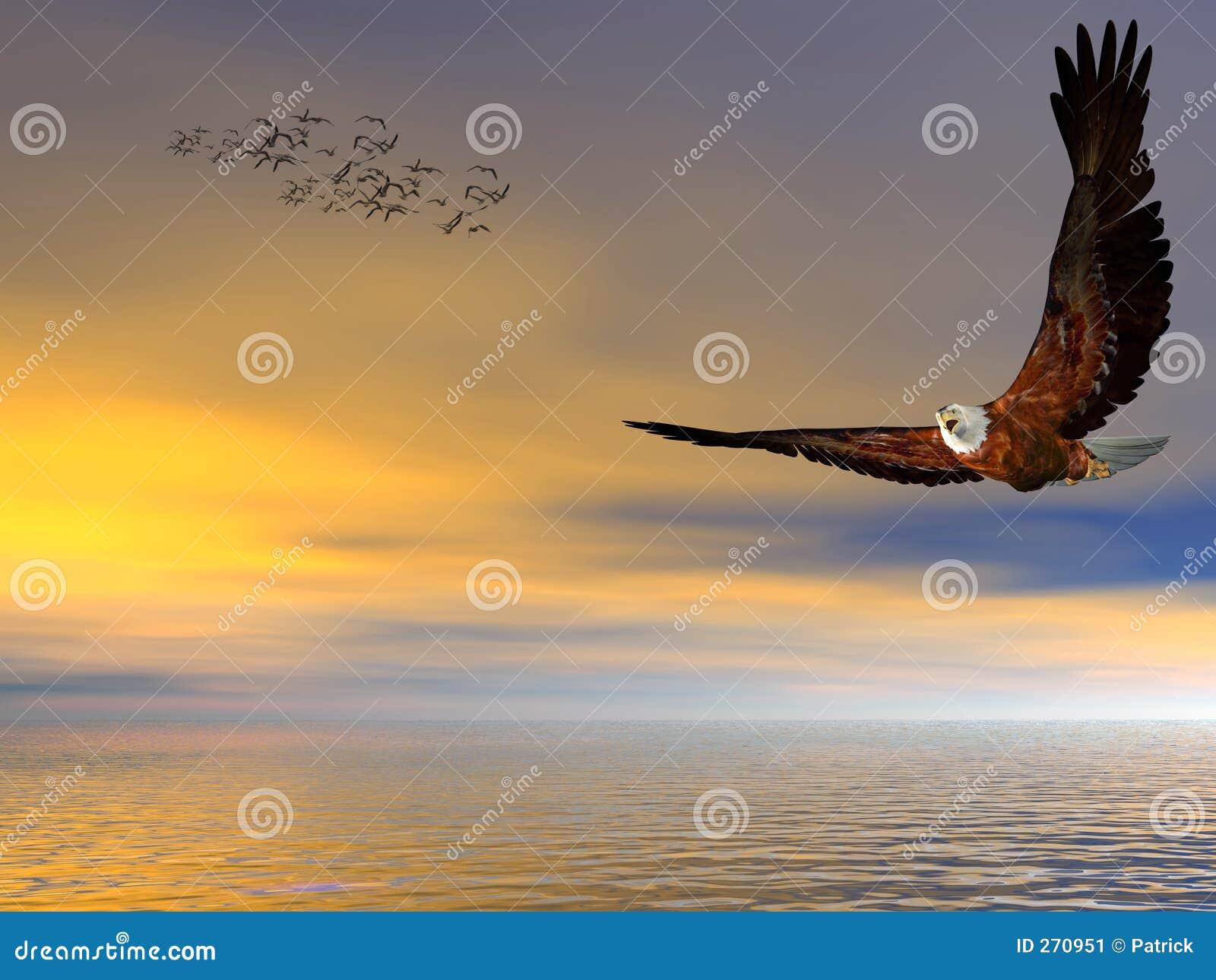 Águia calva americana, voando livre.