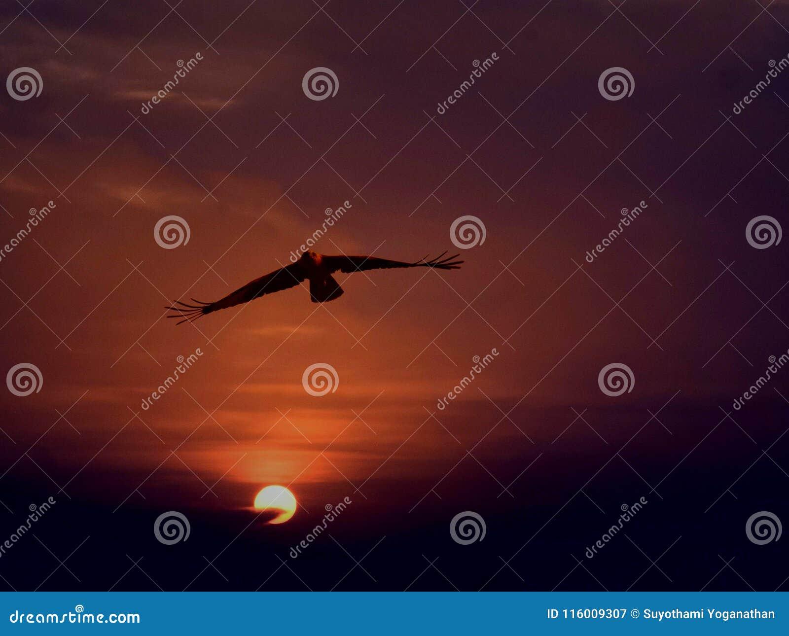 A águia dourada