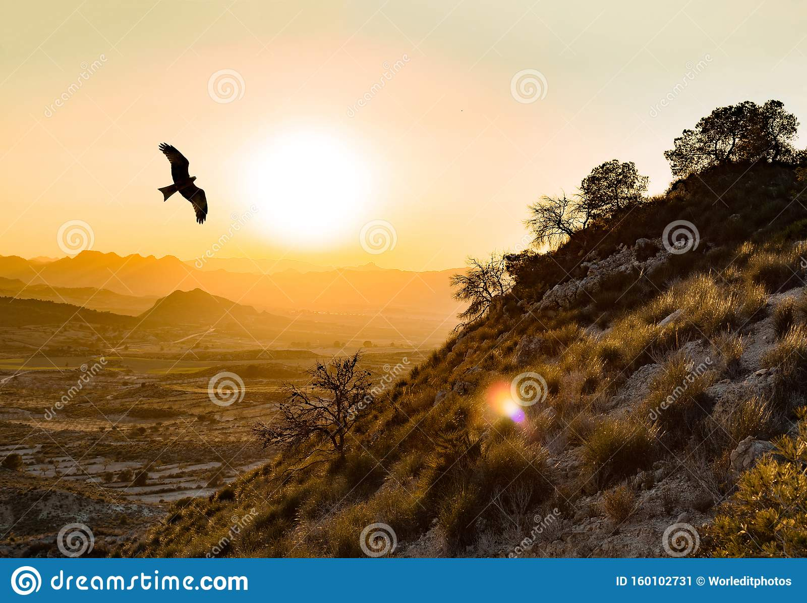 A águia imperial selvagem espanhola voa nos Montes de Toledo, na Península Ibérica, ao pôr do sol Aquila adalberti ou ibérica