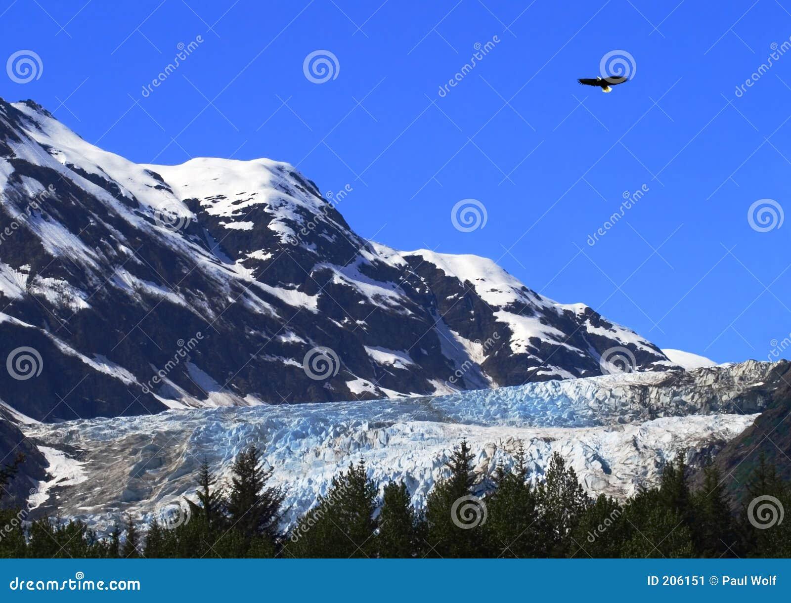 Águia sobre a geleira de Davidson