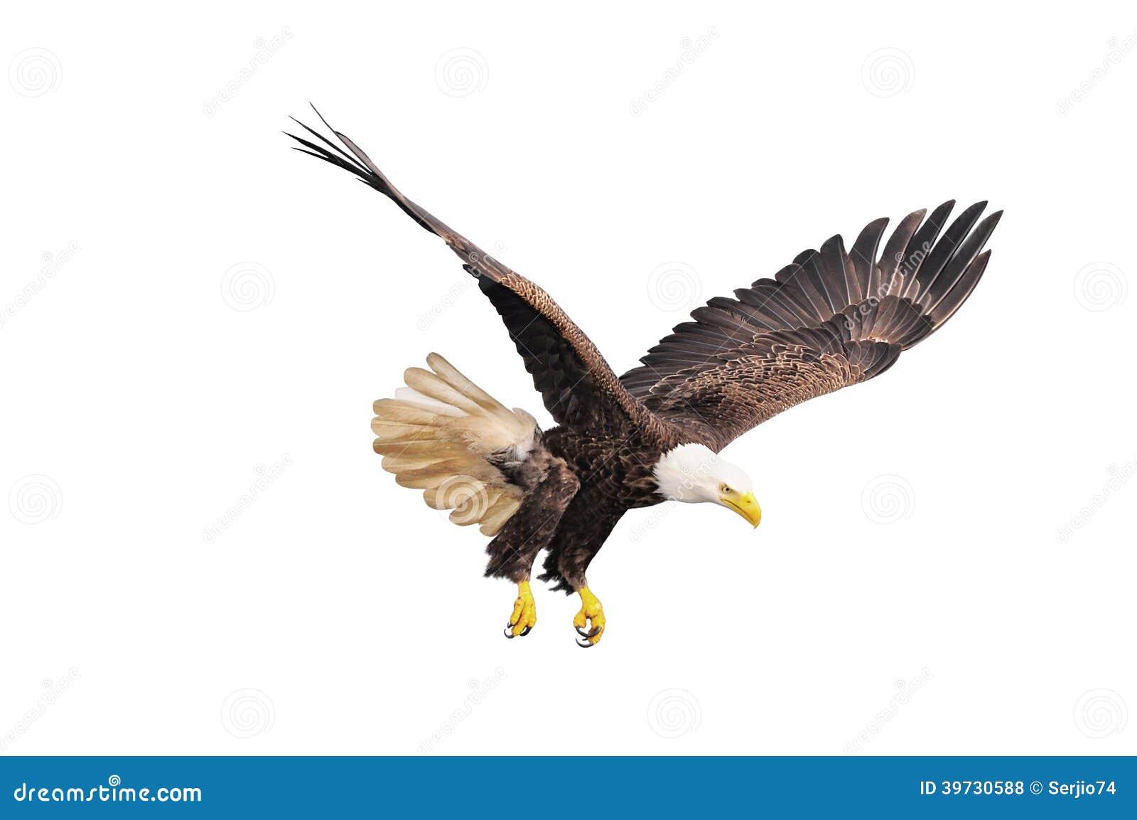 Águila calva.