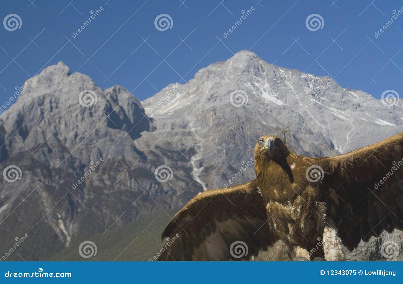 Águila en la montaña de la nieve del dragón del jade