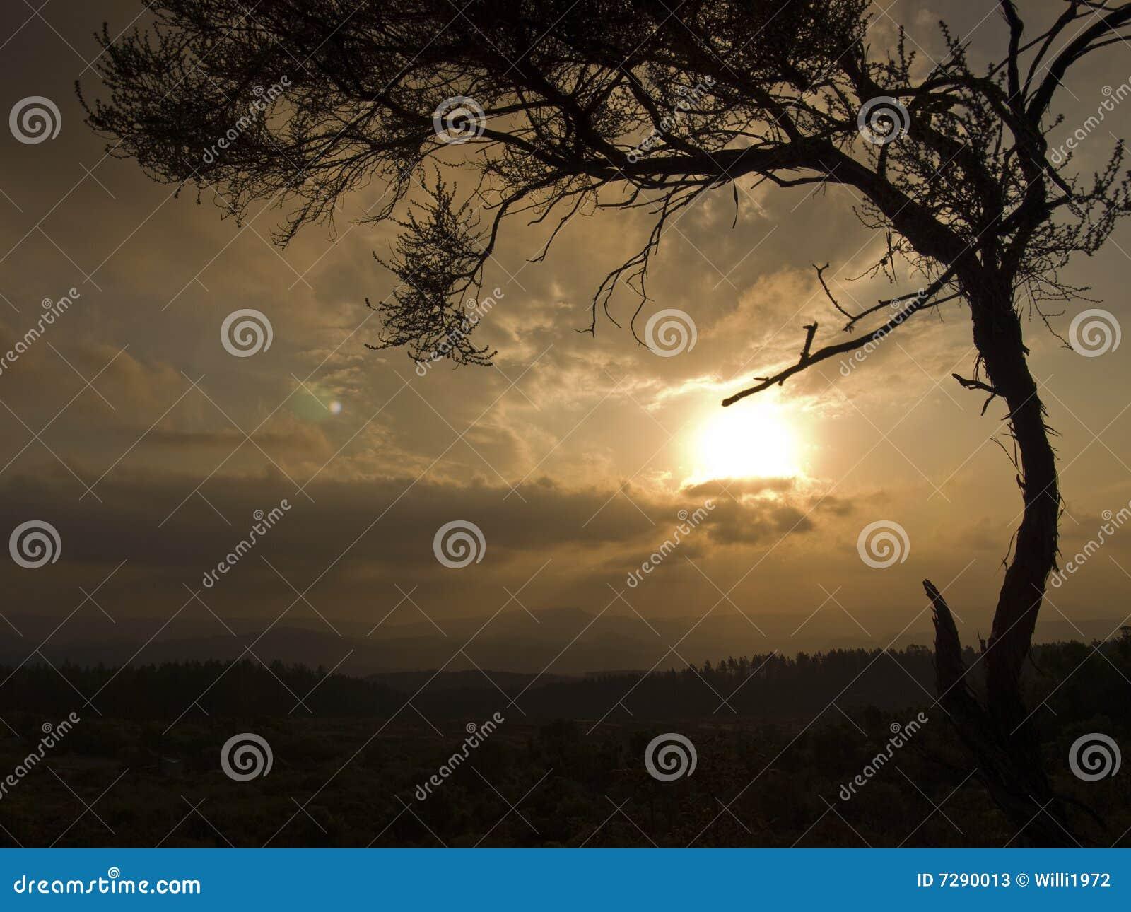 Árbol africano en la puesta del sol