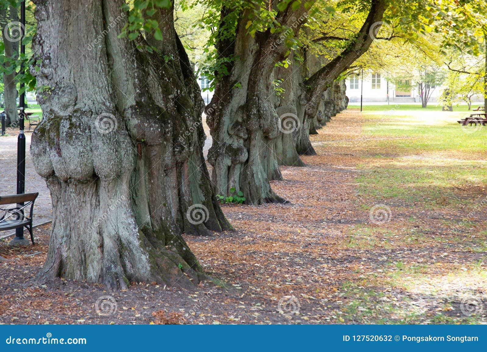 Árbol alineado, parque de la ciudad