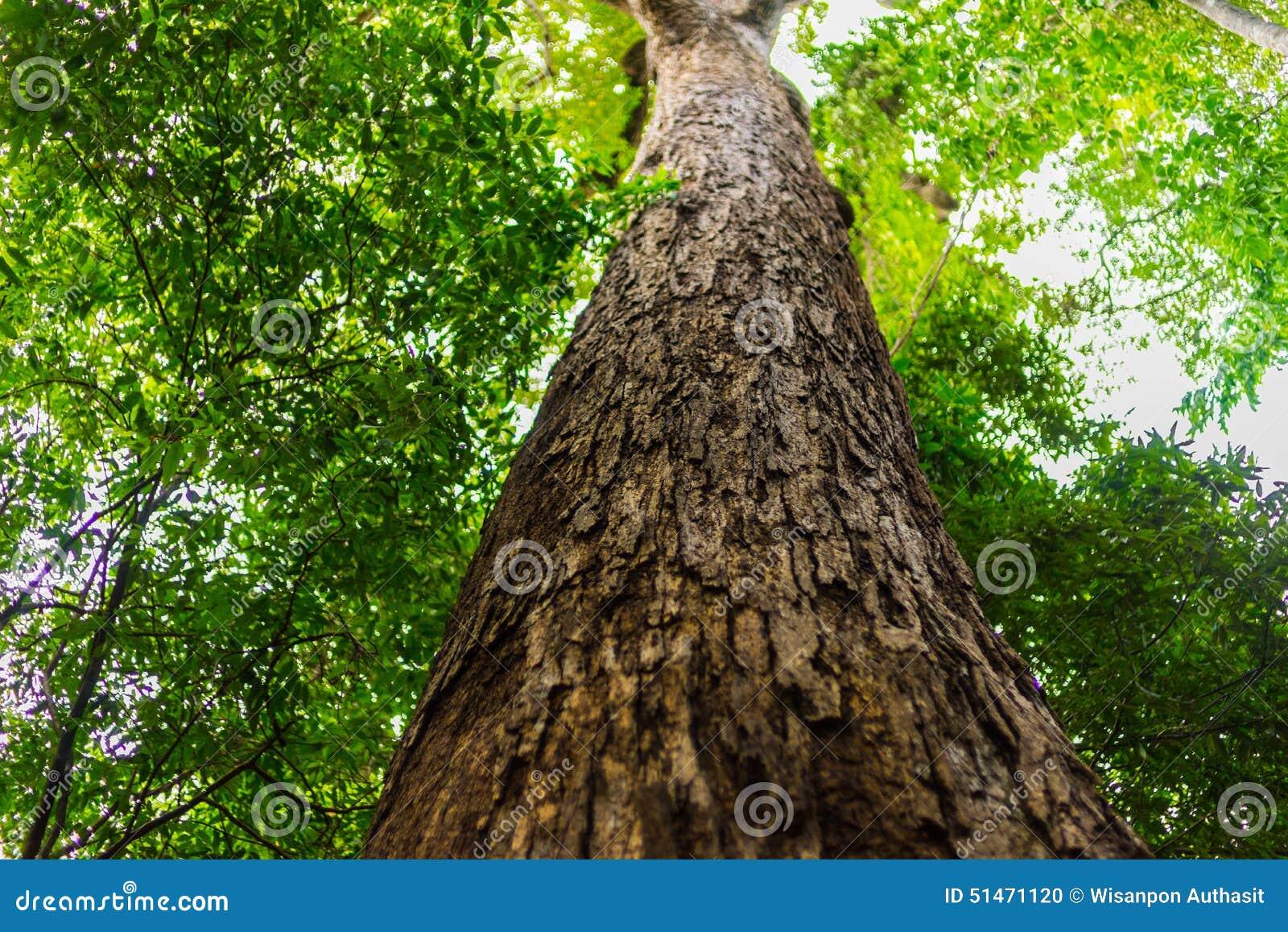Árbol alto en bosque