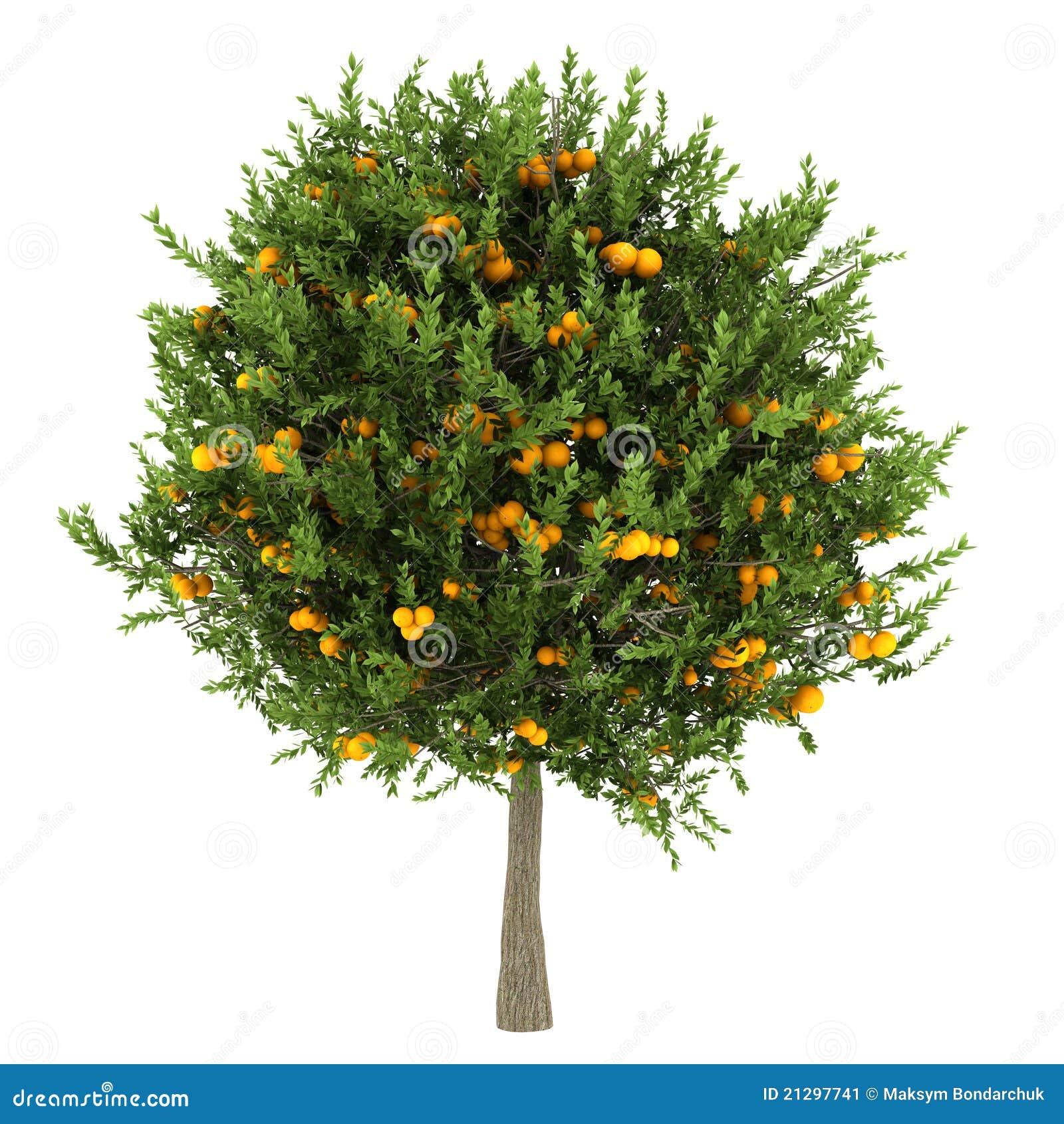 Árbol anaranjado aislado en blanco