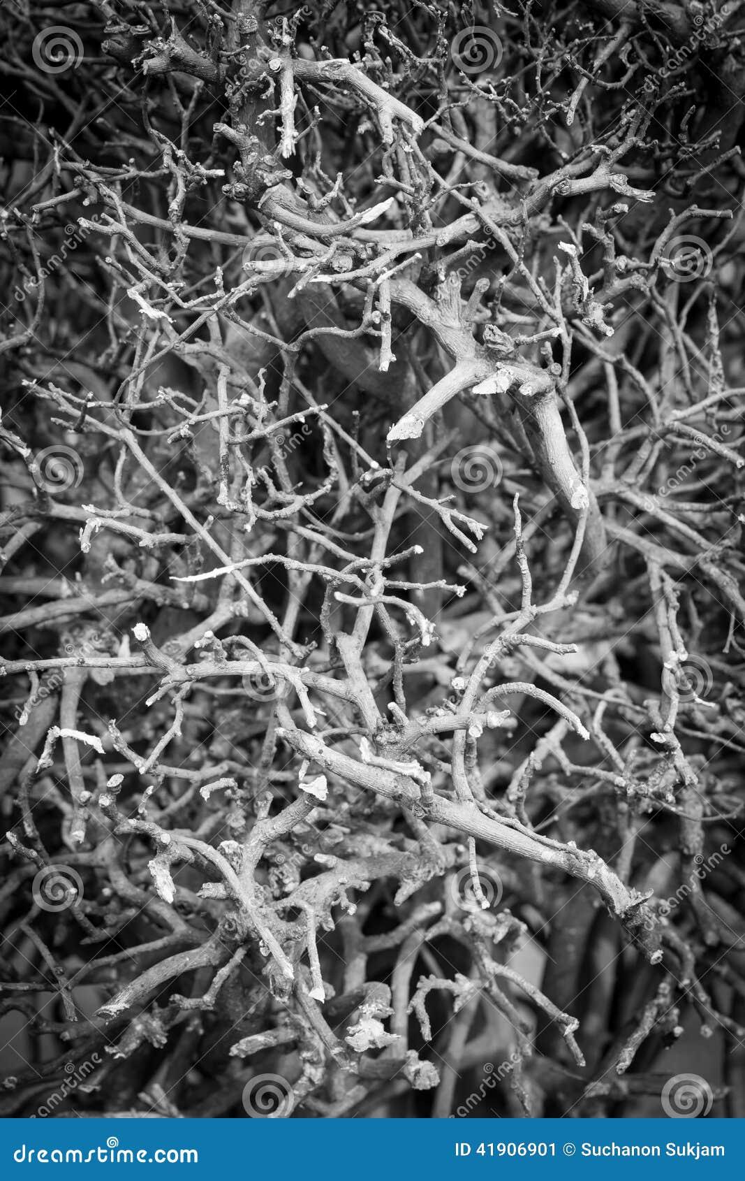 Árbol arbustivo seco del grupo