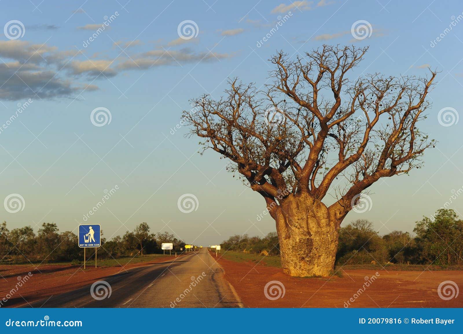 Árbol Australia occidental de Boab