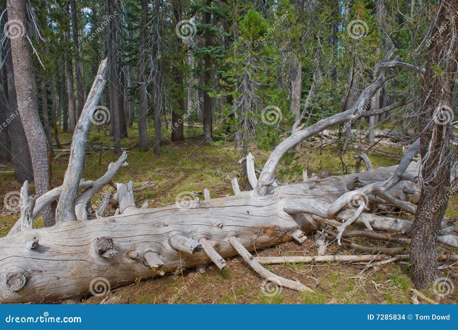 Árbol caido en bosque