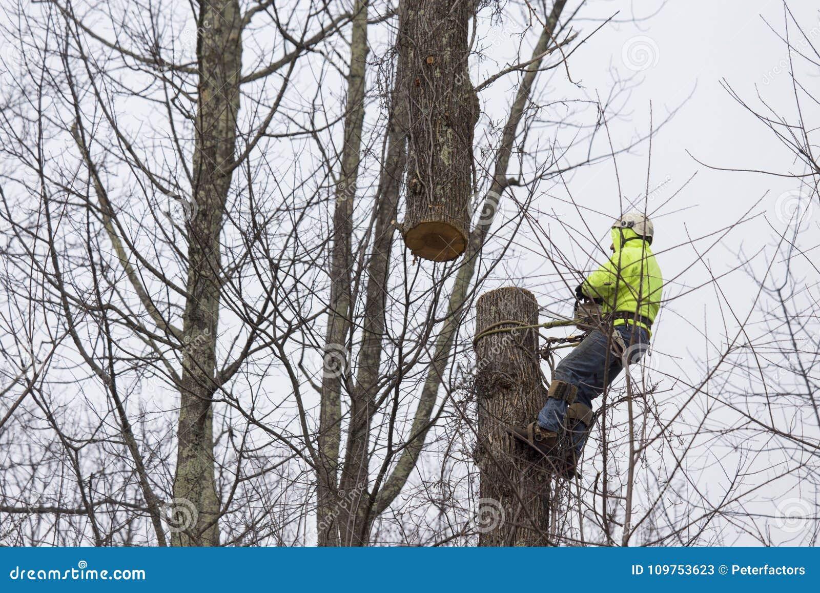 Árbol cuting del hombre