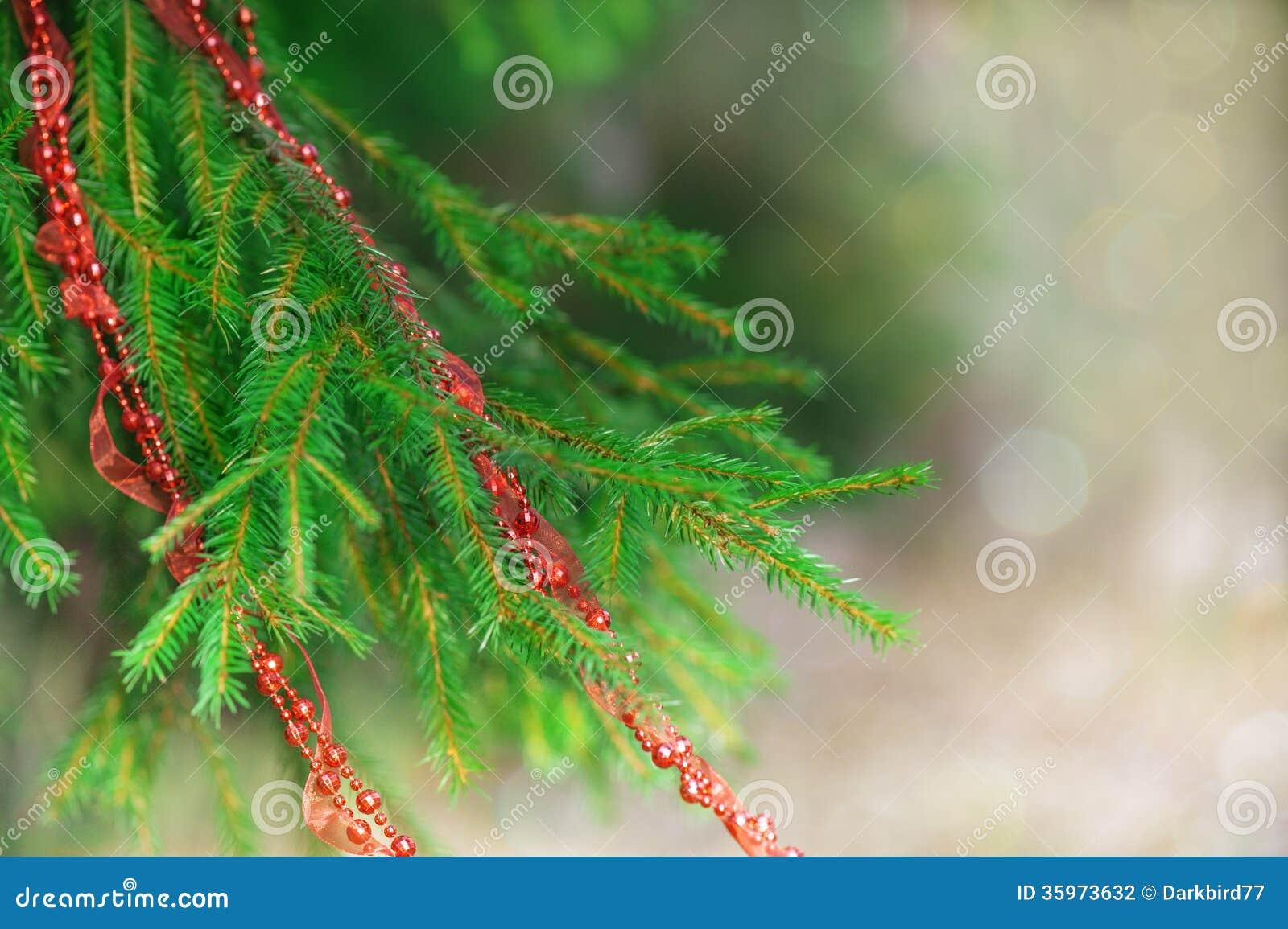Árbol de abeto con la guirnalda roja