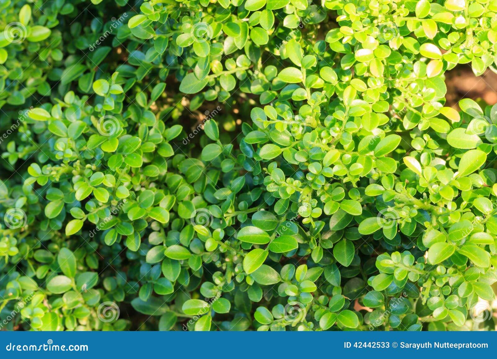 Árbol de cristal de los bonsais