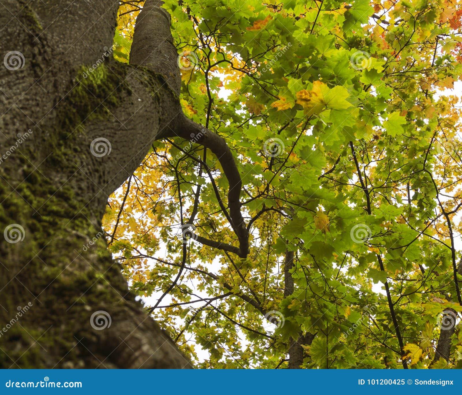 Asombroso árbol De La Caída Del Arte Del Uña Bosquejo - Ideas Para ...