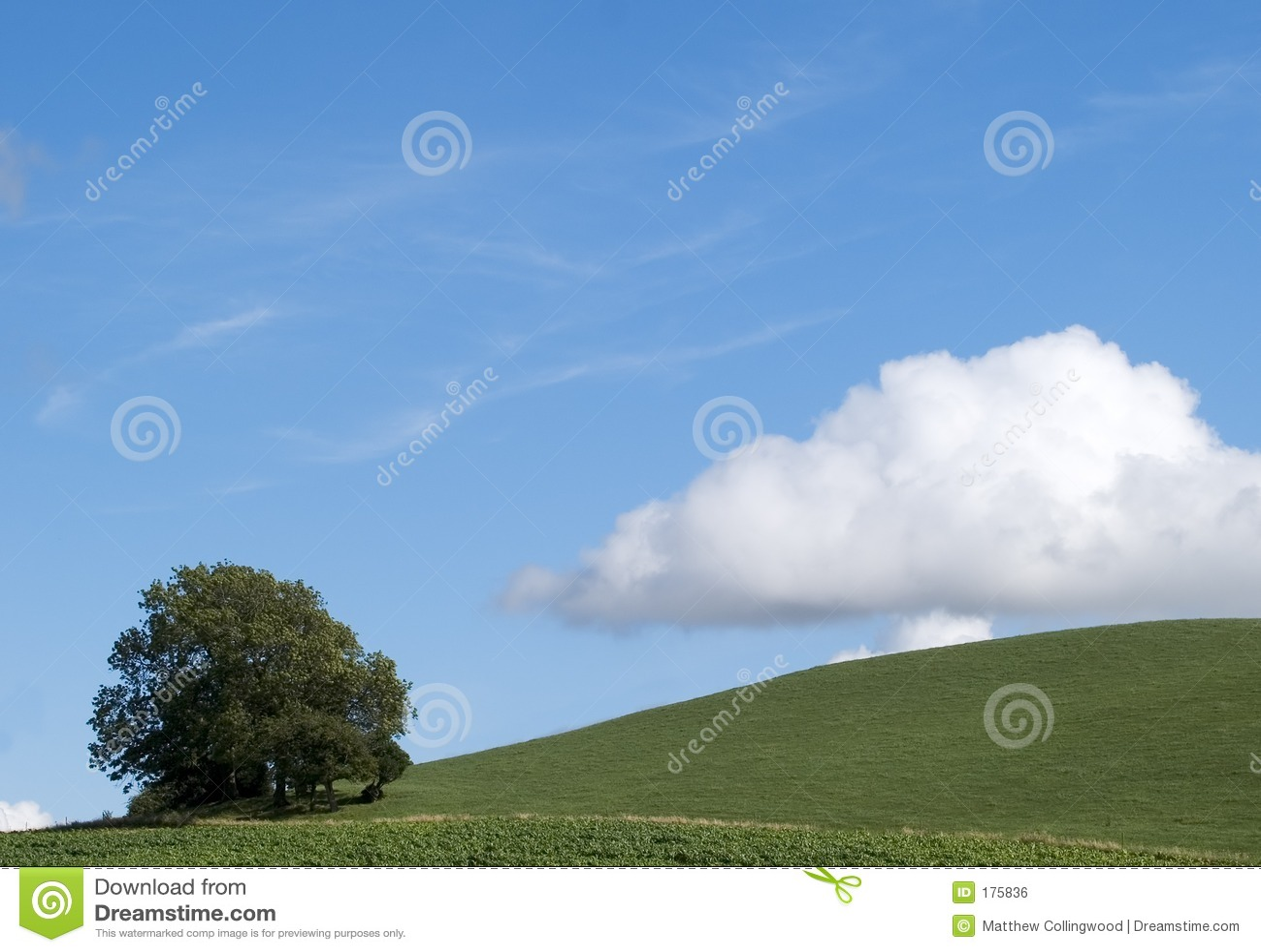Árbol de la ladera