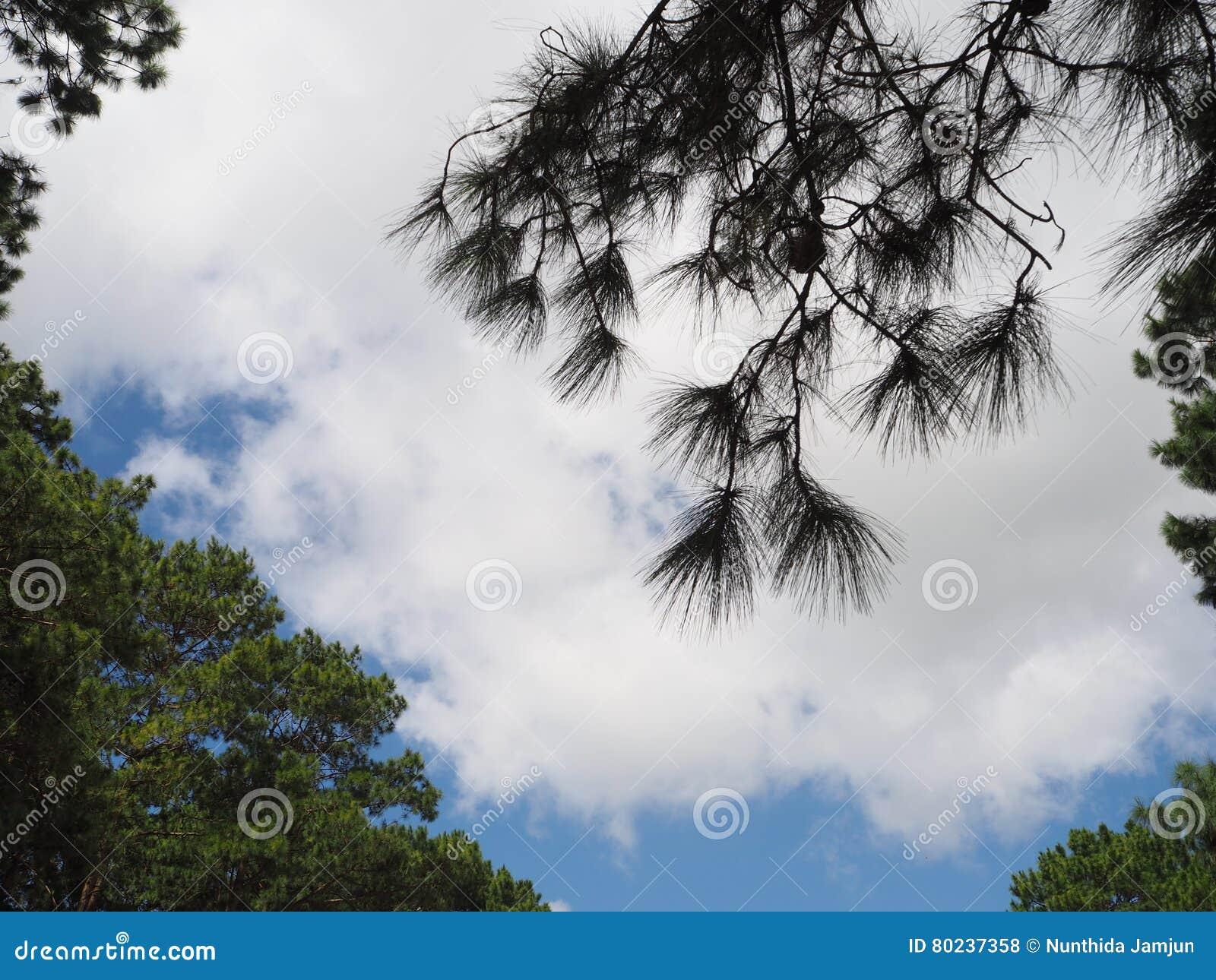 Árbol de la luz de cielo