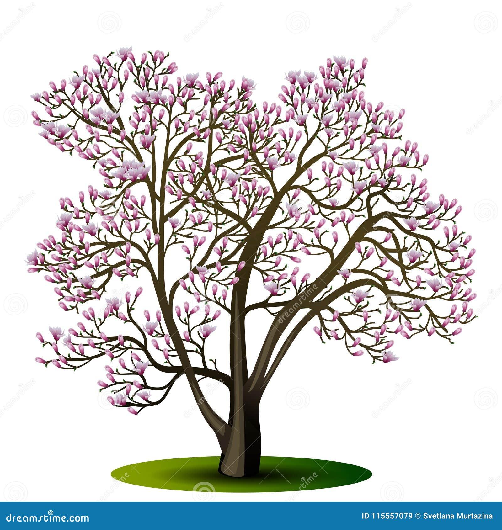 Árbol de la magnolia con las flores rosadas