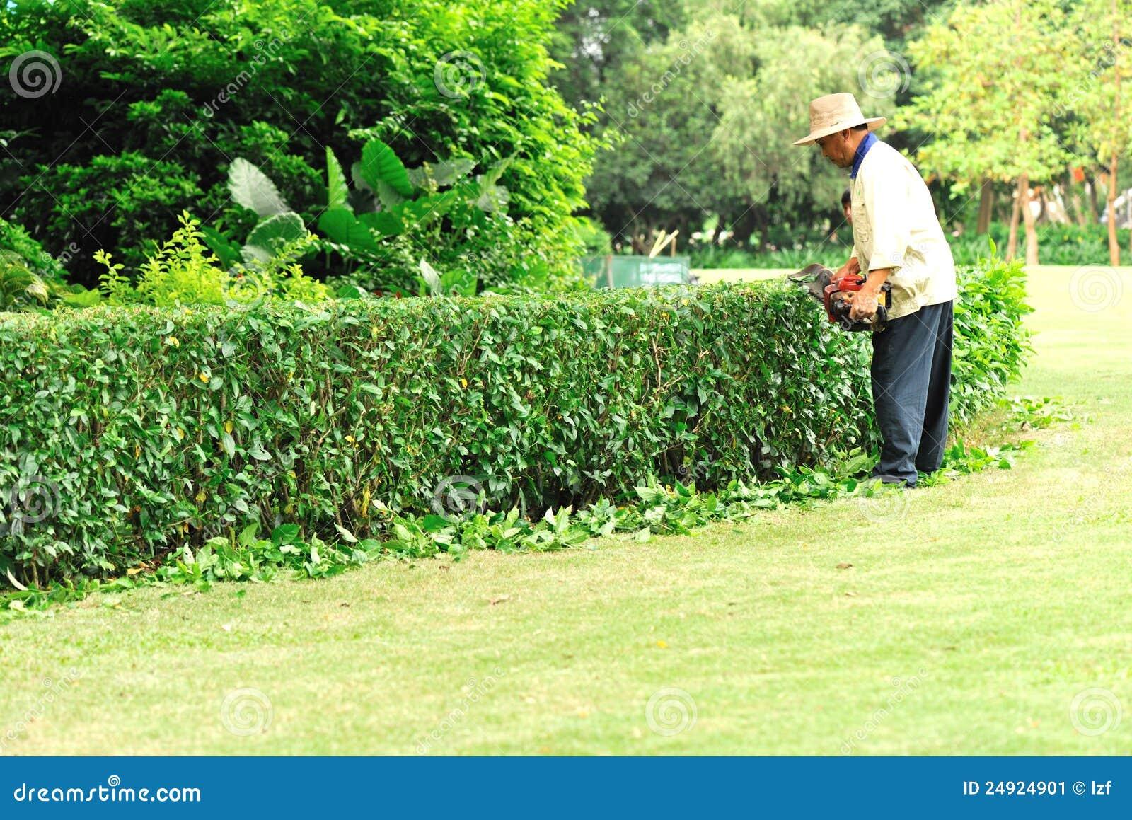 Árbol de la poda del jardinero