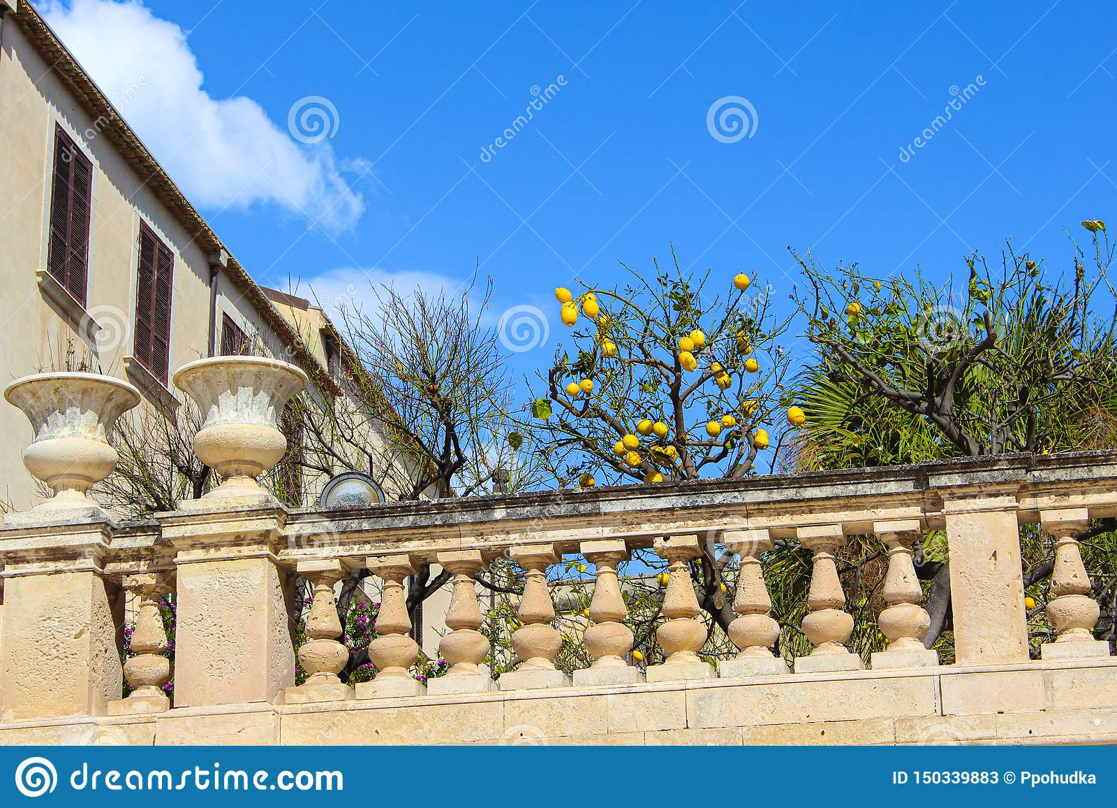 Árbol de limón con los limones maduros en balcón histórico adyacente a Santa Lucia Church en el cuadrado de Piazza Duomo en la is