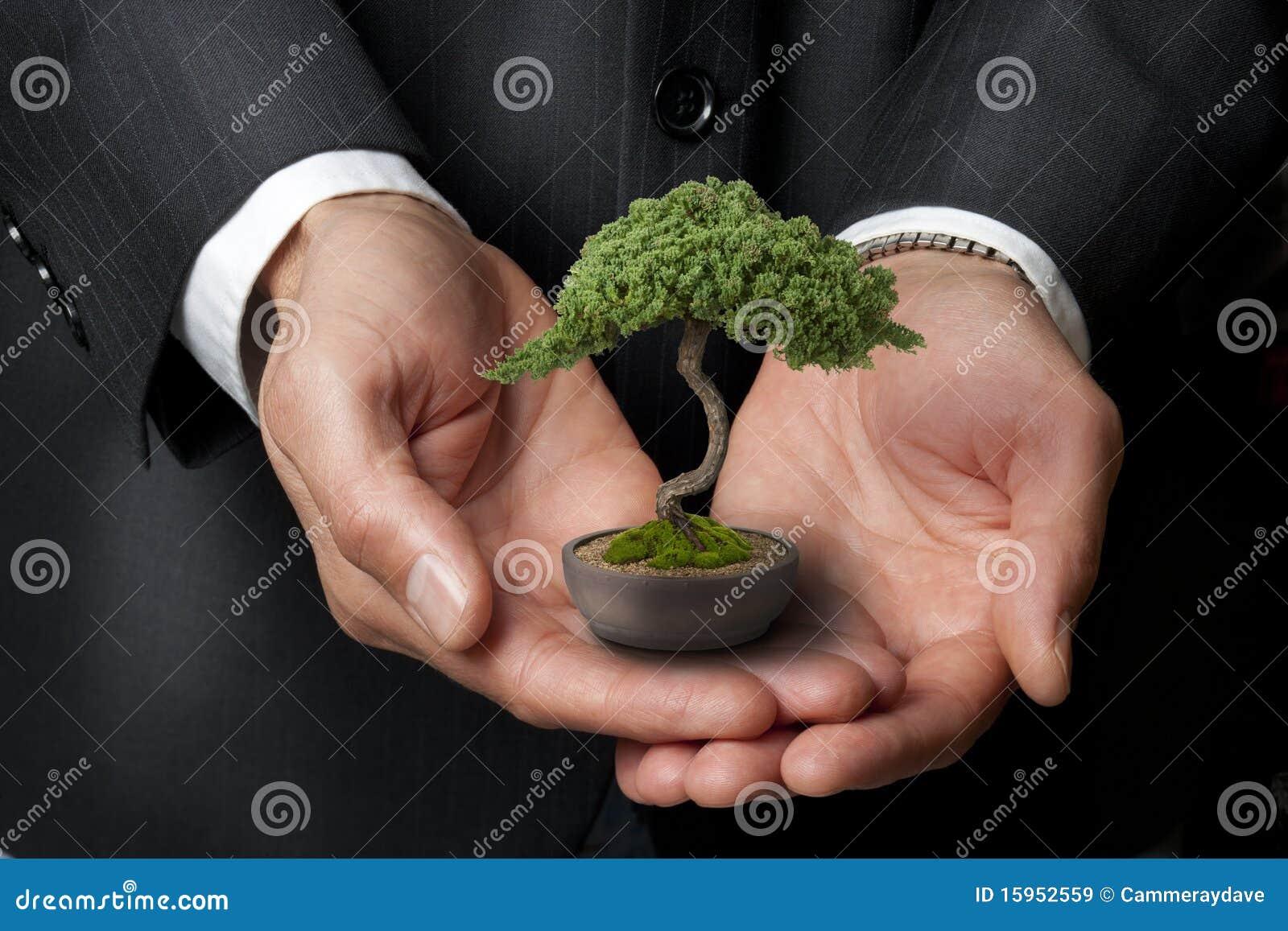 Árbol de los bonsais de la sabiduría del asunto