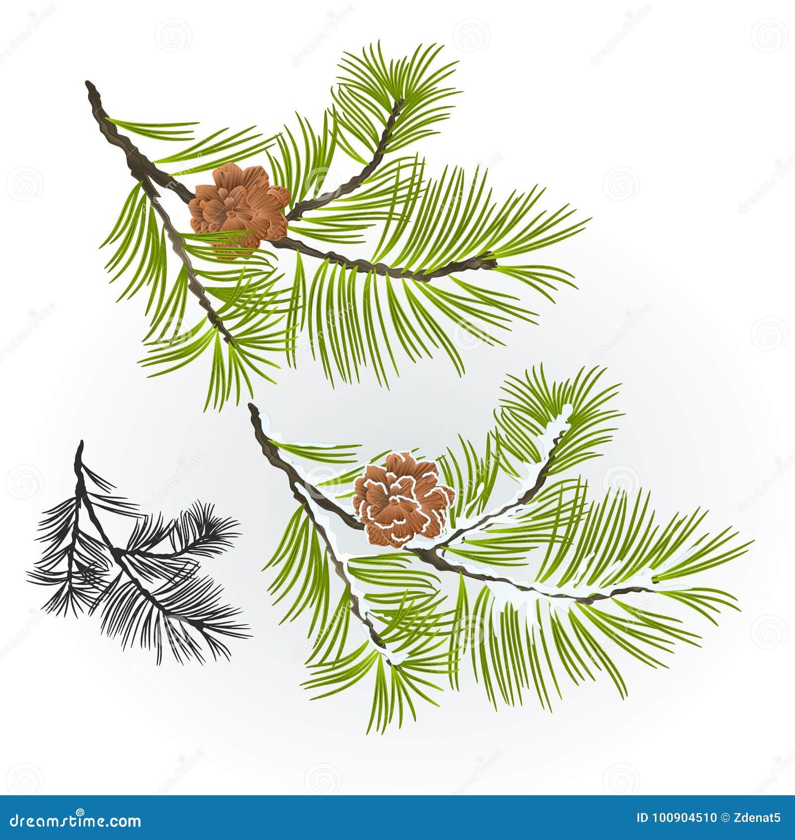 Árbol de pino y rama de los conos del pino otoñal y ejemplo nevoso del vector del fondo natural del invierno editable