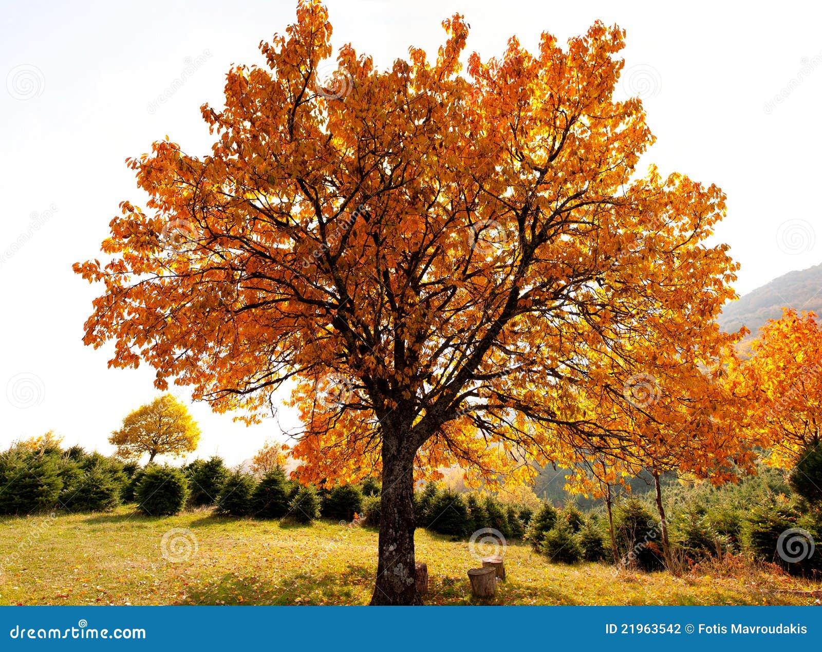 Árbol de roble en otoño