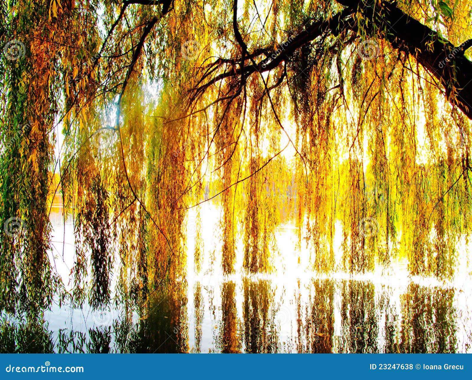 Árbol de sauce sobre un lago