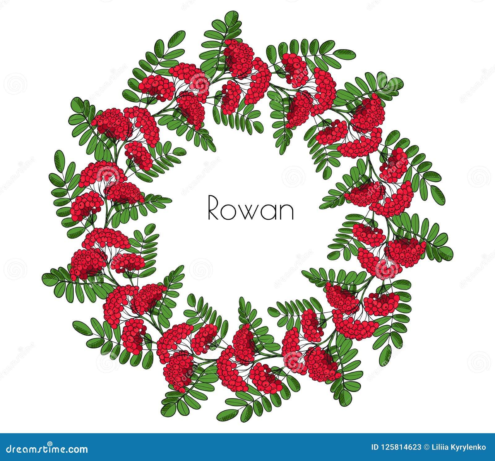 Árbol de serbal rojo de la guirnalda Ramita del ornamento de la sorba o ashberry el anillo decorativo del elemento se va y racimo