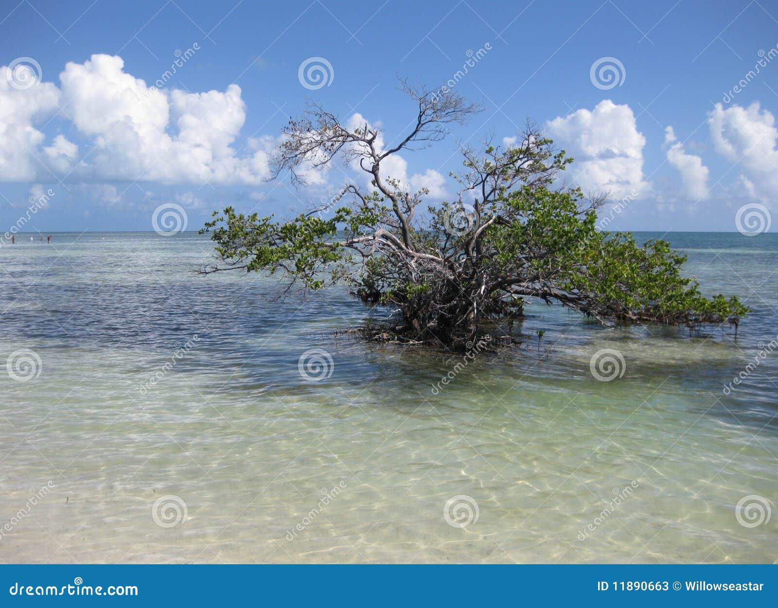 Árbol del agua salada