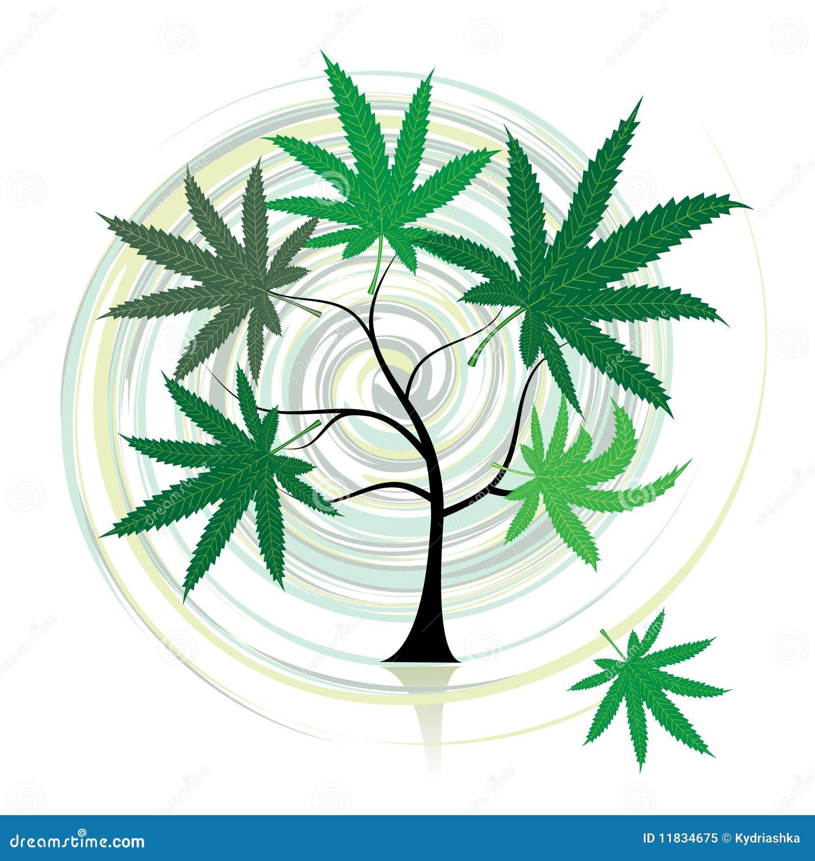 Árbol del cáñamo