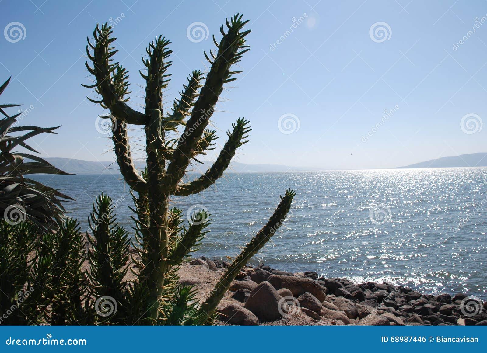 Árbol del cactus en una orilla de la playa