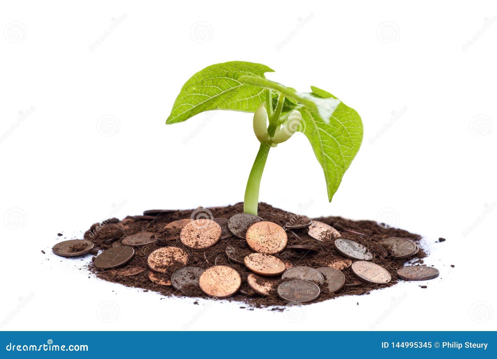 Árbol del dinero - crezca su riqueza