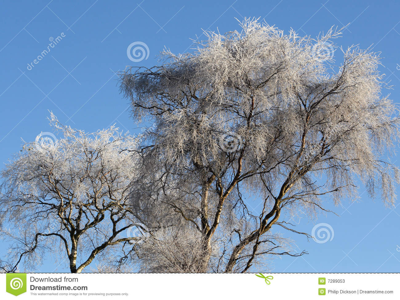Árbol del invierno
