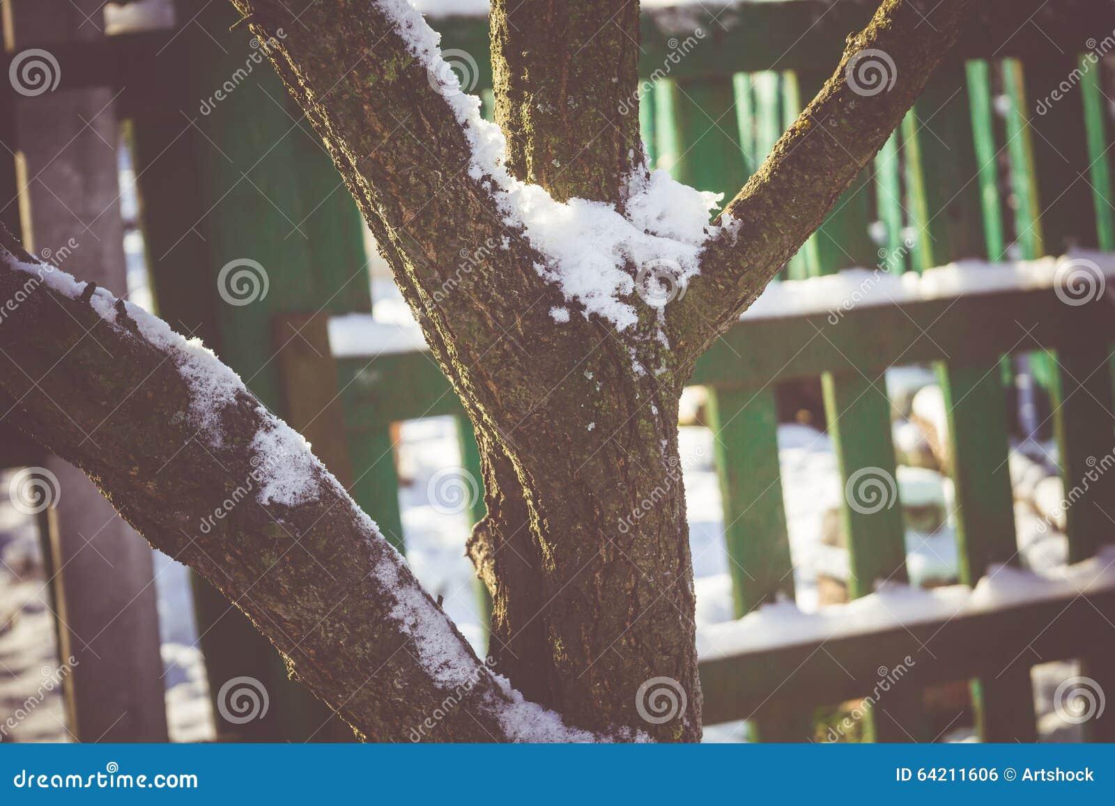 Árbol del invierno con macro de la nieve