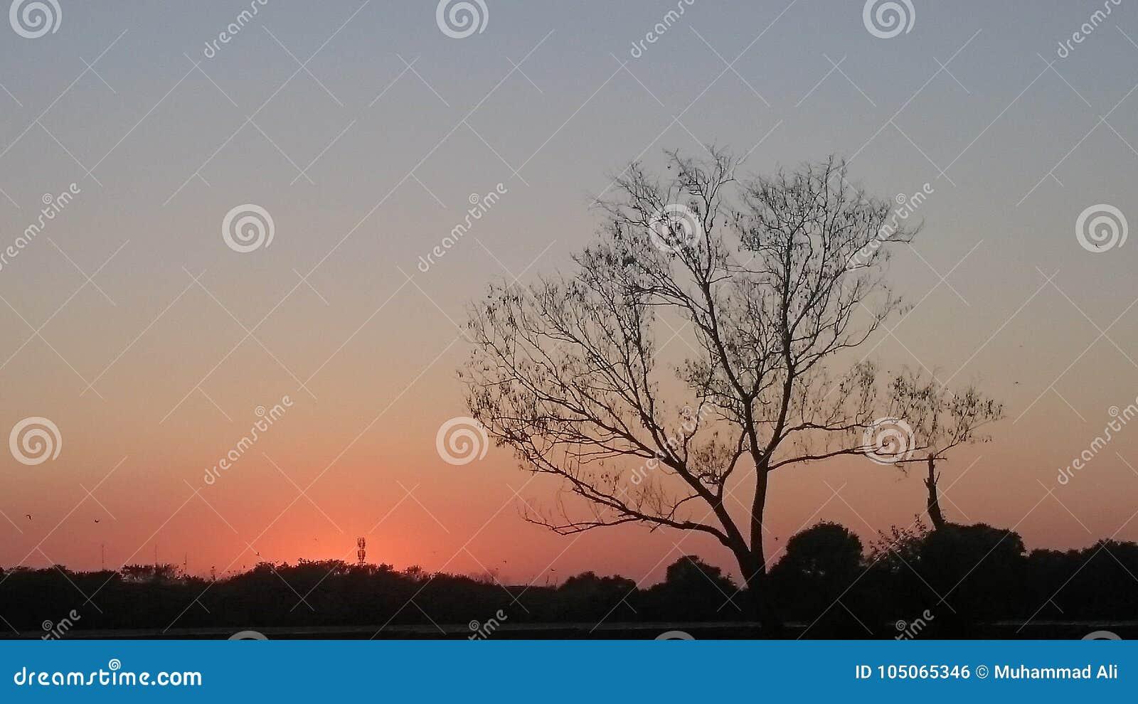Árbol del otoño durante puesta del sol