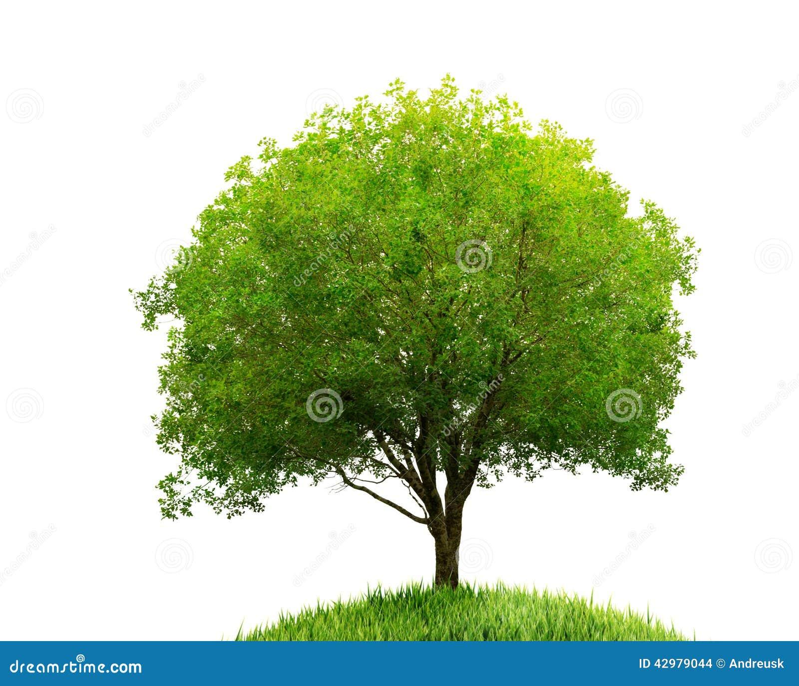 Árbol e hierba aislados