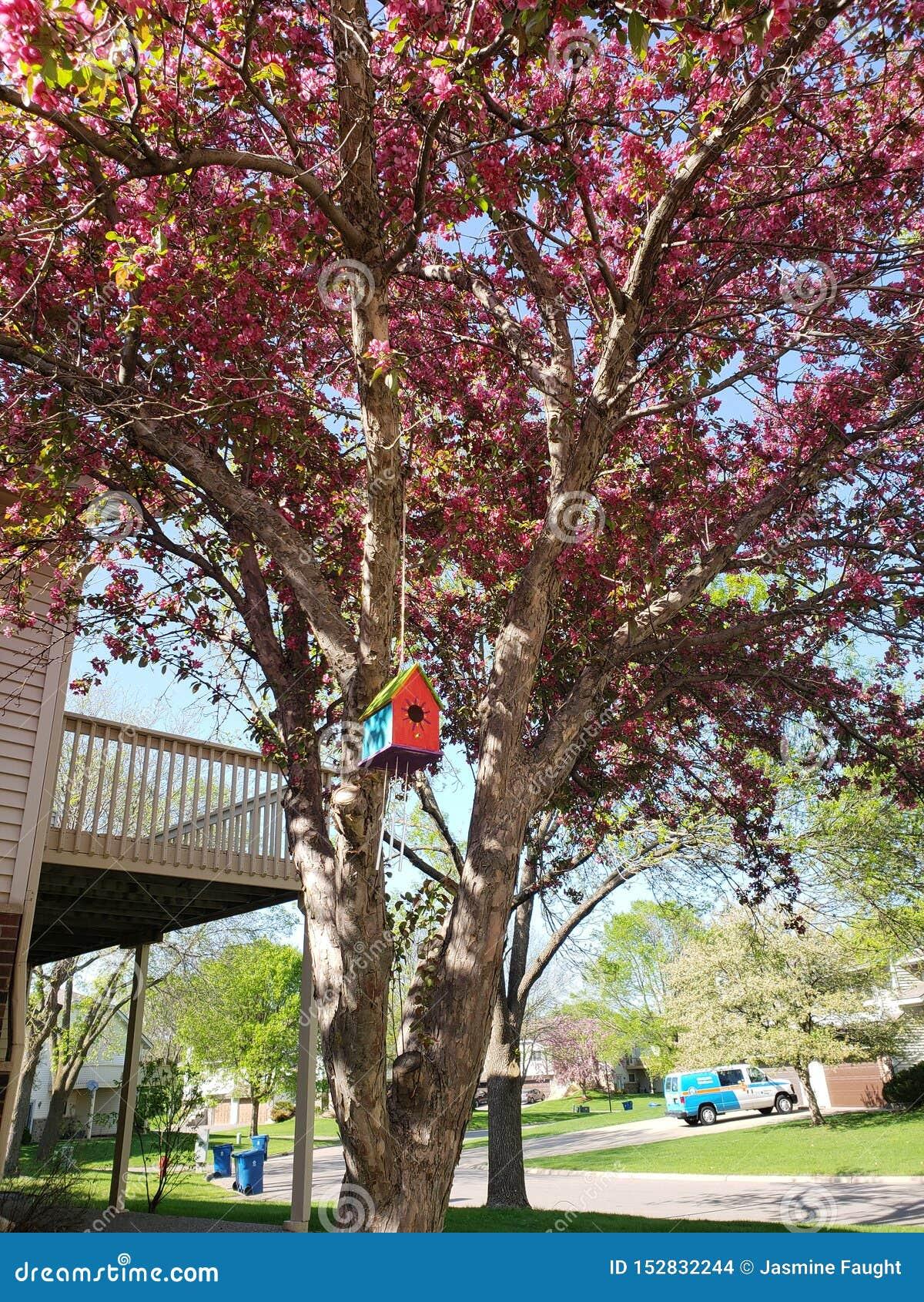 Árbol en Burnsville Minnesota