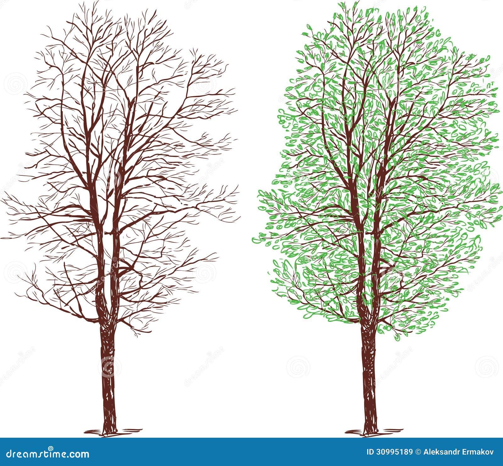 Rbol en invierno y verano for Arboles en invierno