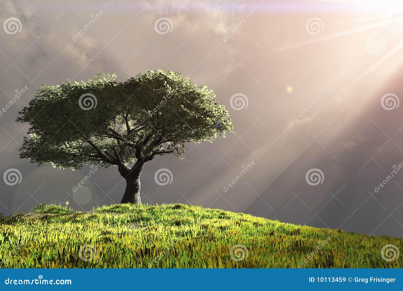 Árbol en la colina con los rayos de la luz