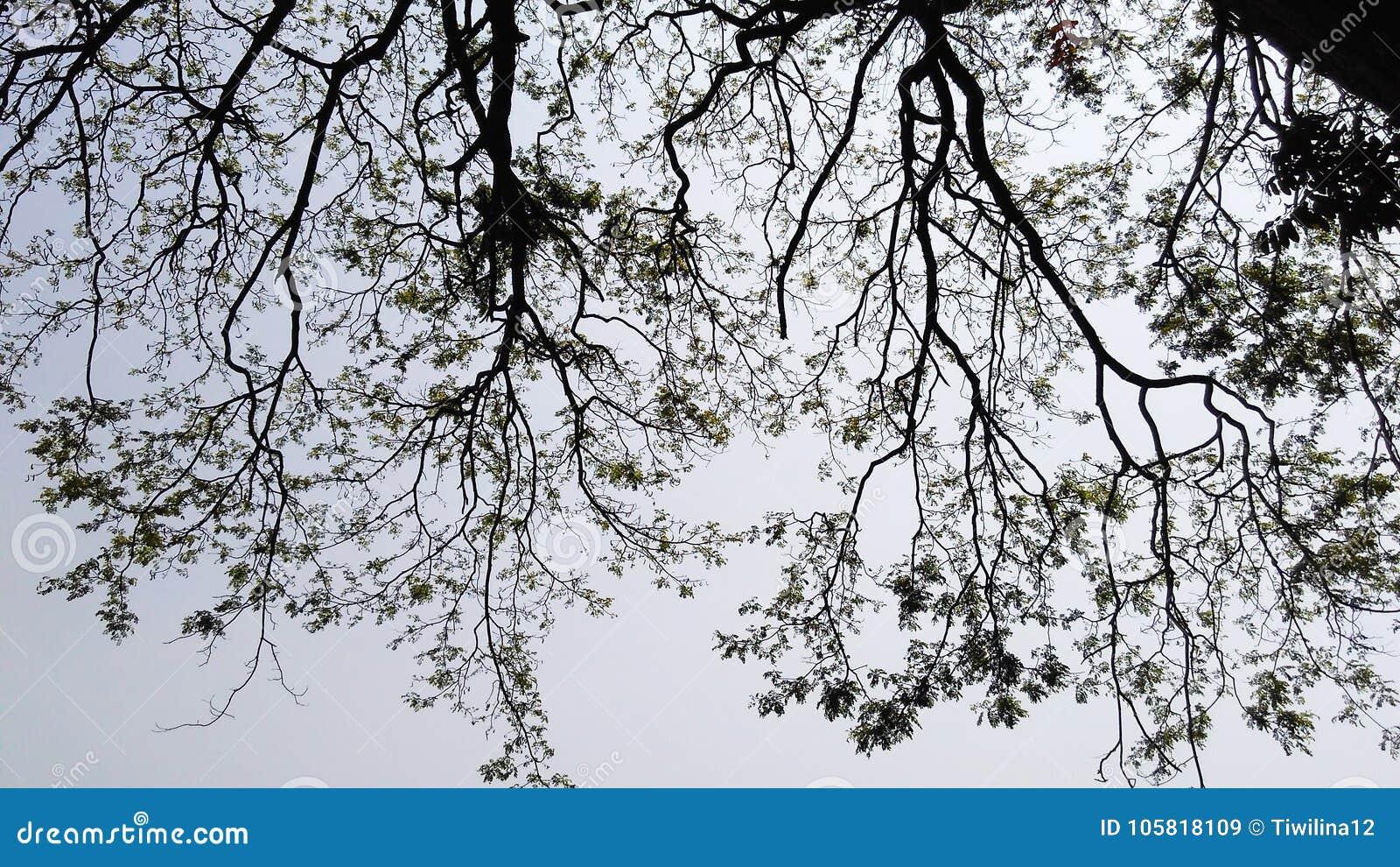 Árbol en la silueta 1 del cielo