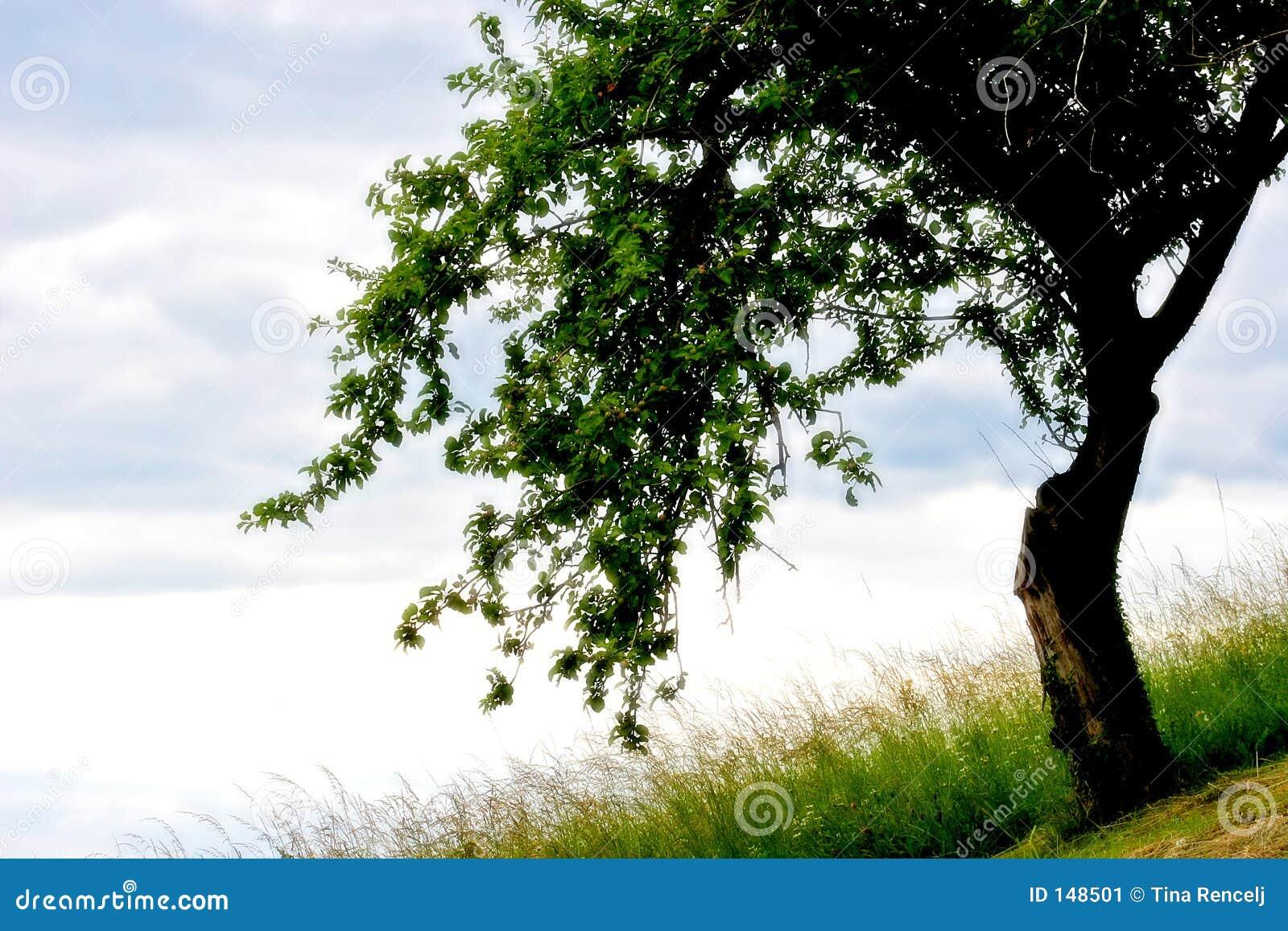 Árbol en mi sueño