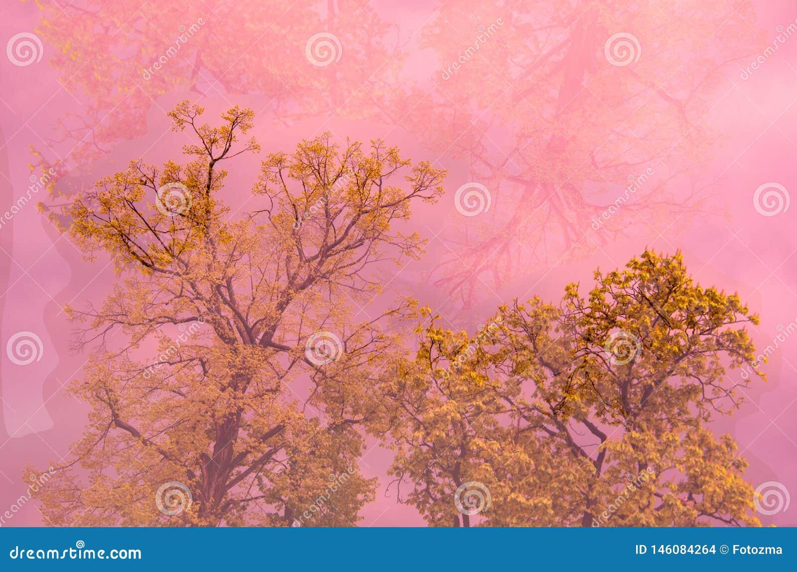 Árbol en niebla rosada
