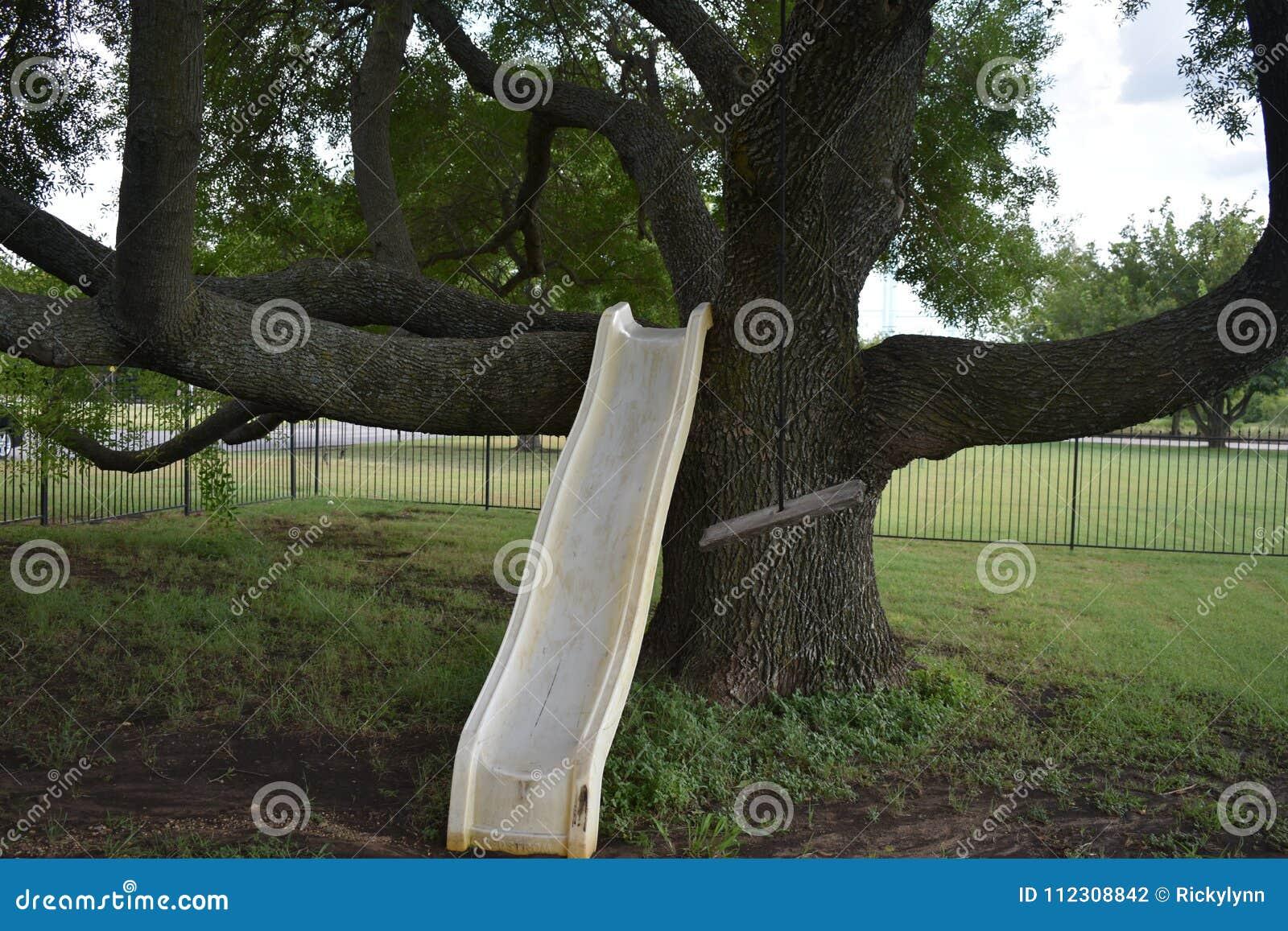 Árbol enorme con la diapositiva