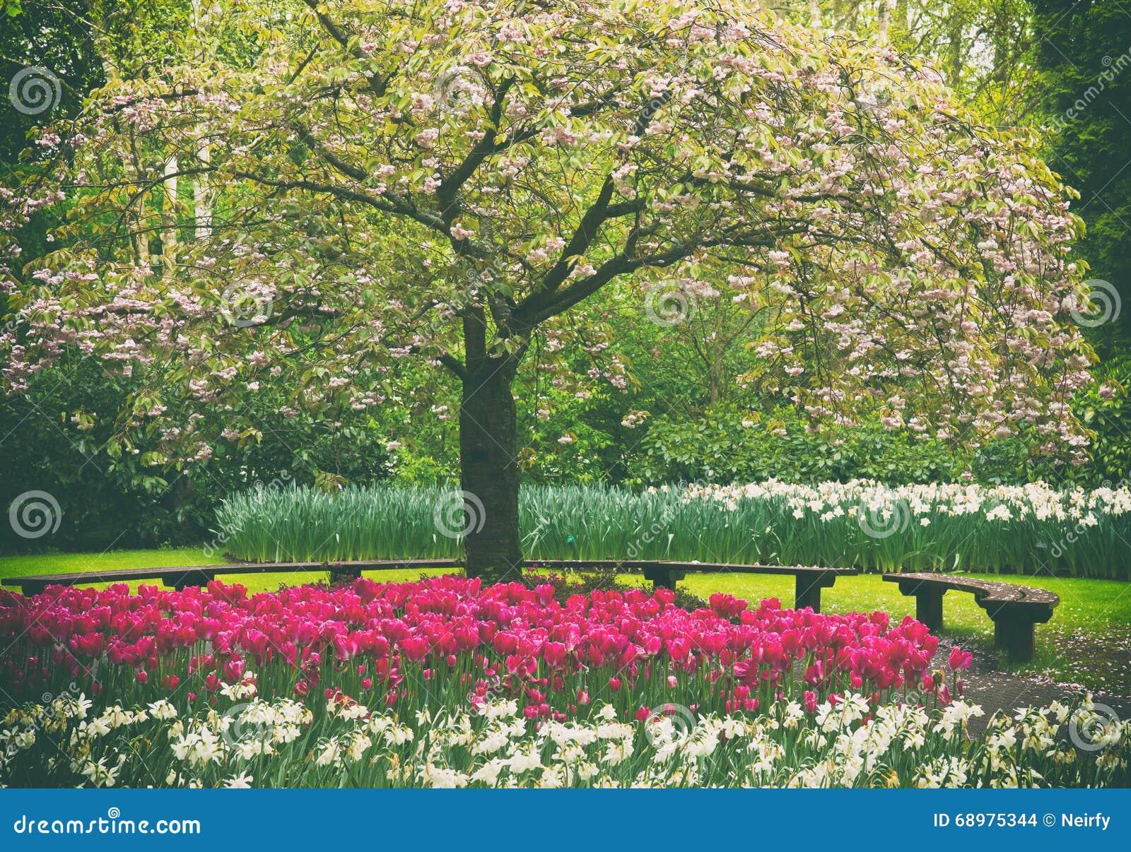 Árbol floreciente de la primavera en jardín