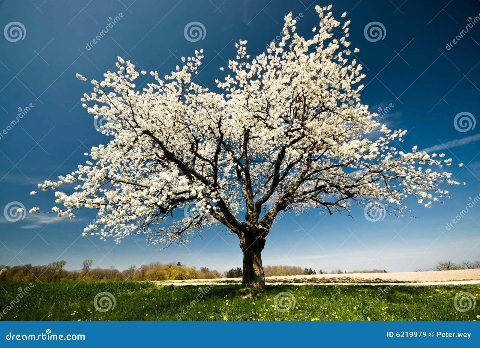 Árbol floreciente en resorte.
