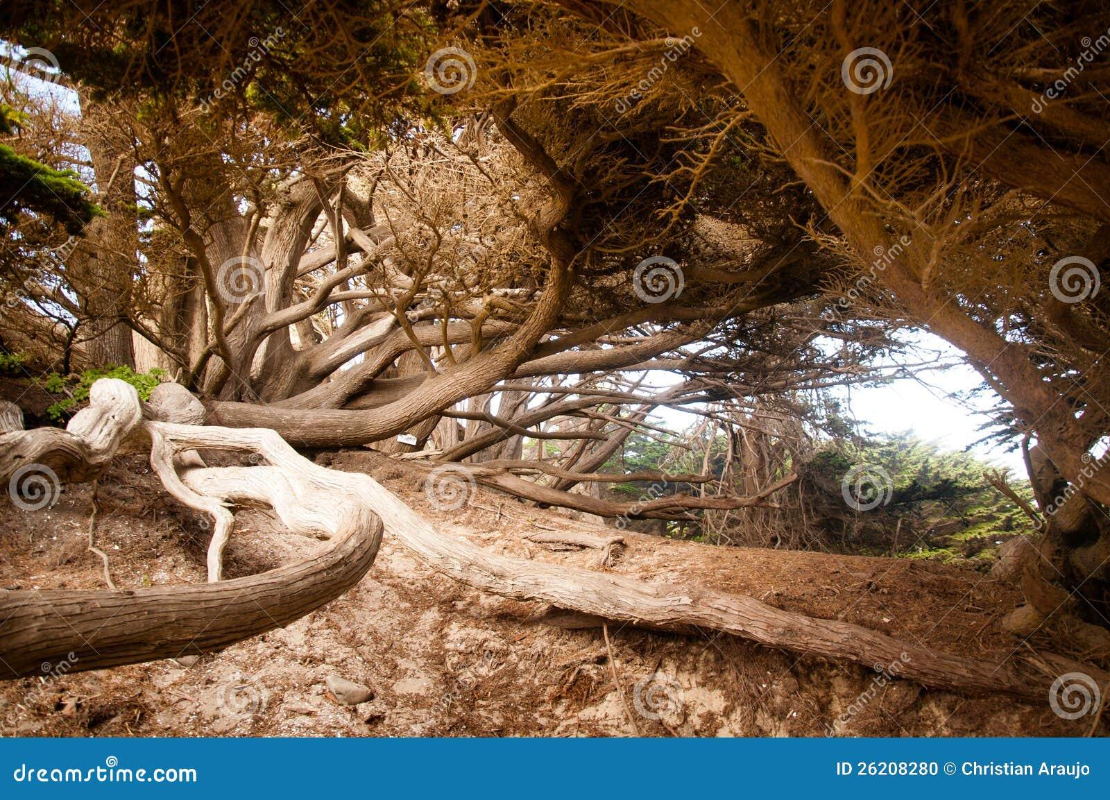 Árbol grande de Sur
