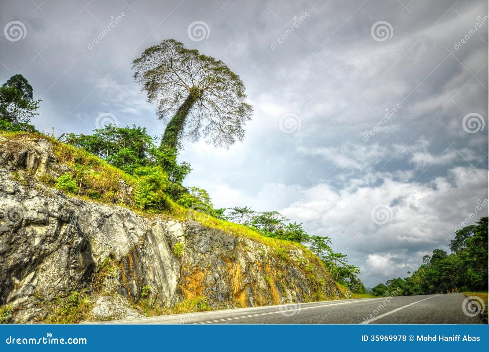 Árbol grande en la colina cerca del borde de la carretera