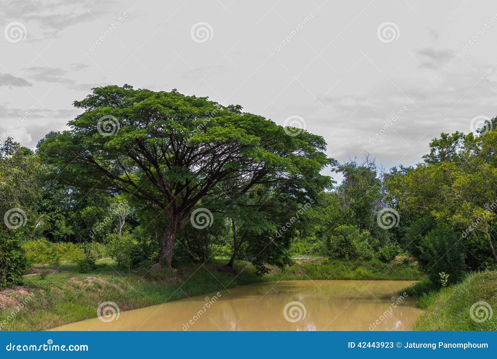 Árbol grande viejo