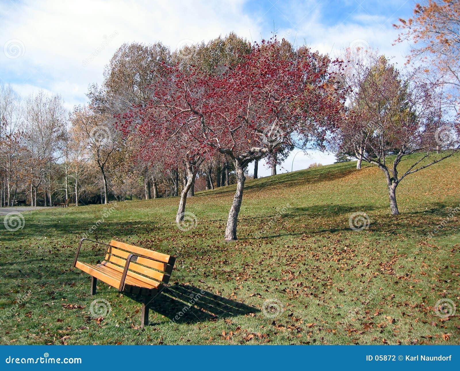 árbol hojeado rojo con el banco de parque